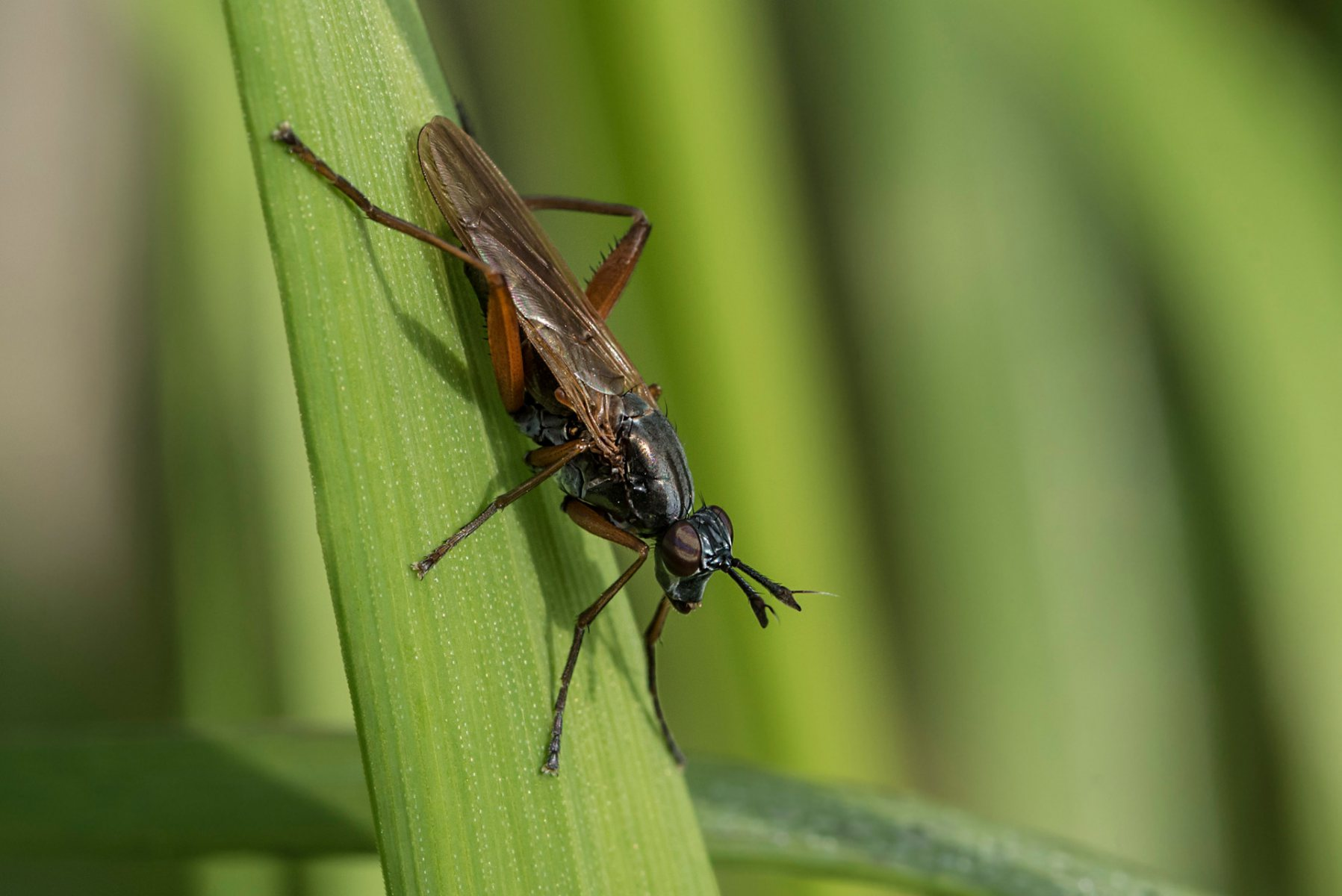 298_Insect